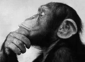 mono pensandor para el sofisma